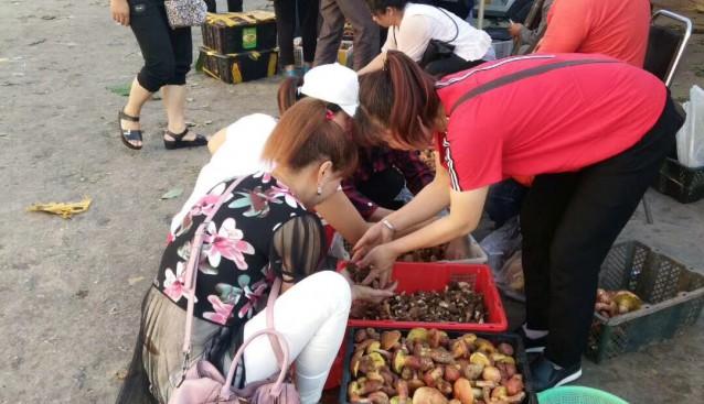 云南:野生菌陆续上市 品菌正当时