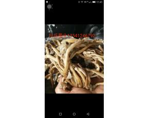 盐渍茶树菇