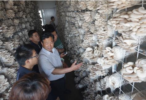 河南西华:食用菌技术培训助数千人创业脱贫