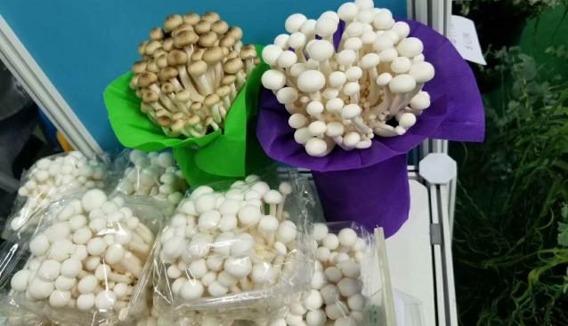 上海:芳原菇业菌类产品在农博会上受到参会代表的一致好评