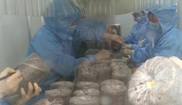 陕西:扶风县胜利食用菌产业示范园正式启动