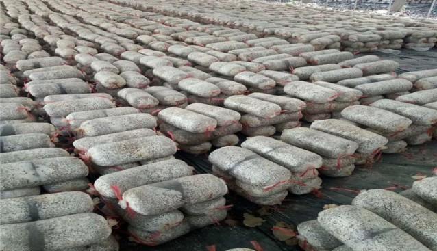 山东:枣庄森雨食用菌公司平菇菌包大量上市