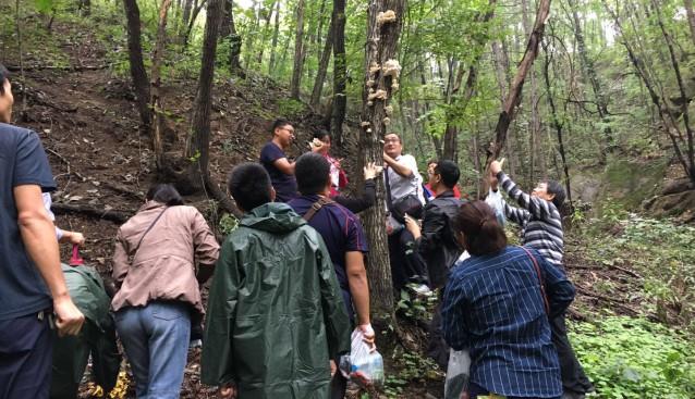 河南省食用菌产业技术体系野生资源调查曁技术交流会在嵩县成功举办