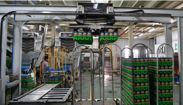 河南:清丰县积极推进食用菌产业向工厂化生产转型