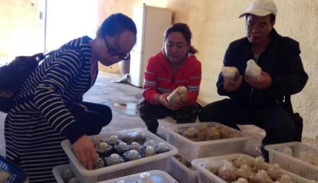 陕西:石泉县香菇喜获丰收 鲜菇远销省外