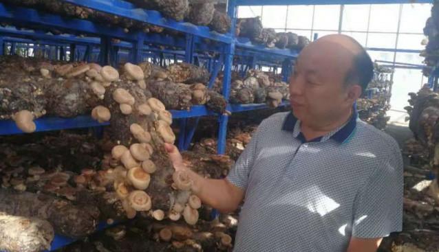 食用菌专家丁伦保国庆期间赴河南参观考察食用菌产业发展情况