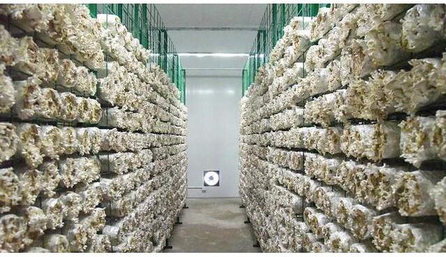 江西:上犹县食用菌产业智能扶贫示范基地拓宽村民就业渠道