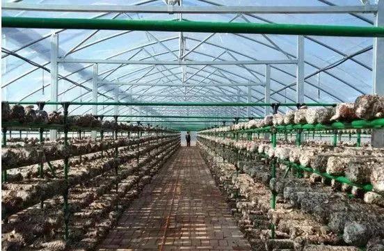陕西:铜川市印台区食用菌产业扶贫基地建成投
