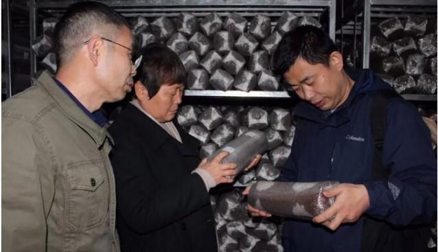 国家食用菌产业技术体系专家检查组莅临昊阳农业考察调研