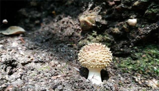 安徽:黄山风景区资源调查已鉴定出野生大型真菌约200种