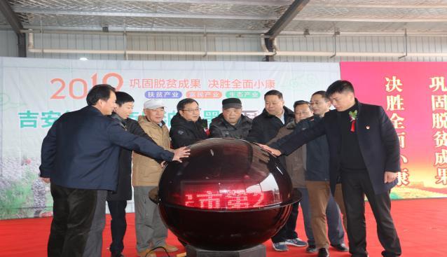 江西吉安县成功举办第二届庐陵油田黑木耳文化节