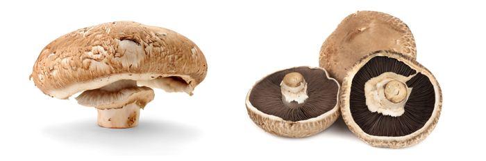 褐菇的营养价值有哪些?