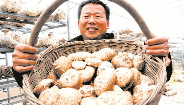 湖北:香菇产业助脱贫