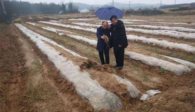 安徽:专家丁伦保到大塘村食用菌生产基地考察