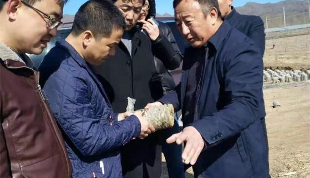 河北:双承生物邀请专家徐连堂现场视察指导工作