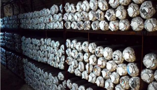 陕西:安乐村发展食用菌 帮助农民脱贫
