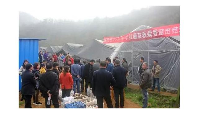 湖北远安县举办2019年羊肚菌及秋栽香菇出菇现场会