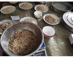 供应全国玉米芯颗粒