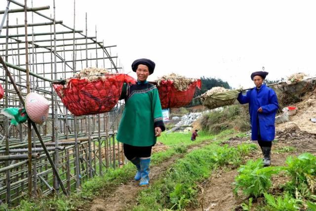 贵州:三都水族自治县发展食用菌种植增