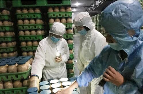 """上海:""""光明森源""""药食同源猴头菇项目"""