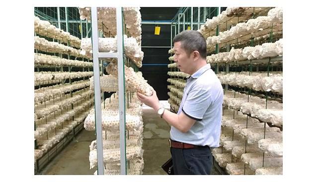 四川:校企联姻打造绿色循环可再生的有机食用菌企业
