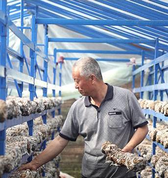 李树林:香菇专家 中国老村长