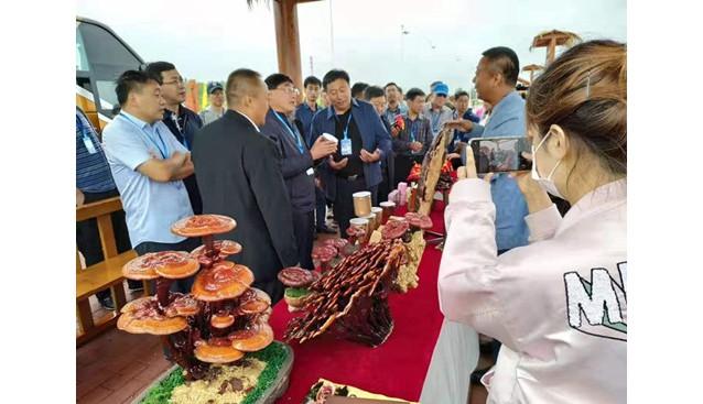 黑龙江:黑河召开农业现场会 农业农村厅领导视察灵芝种植基地