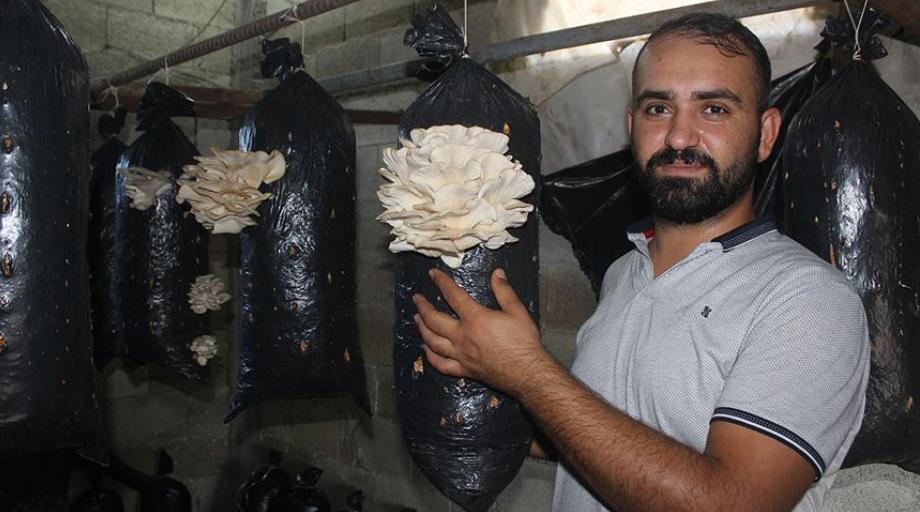 土耳其:小规模吊袋平菇栽培开拓致富新天地