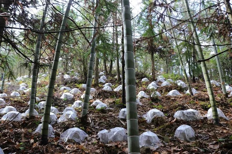 浙江:磐安县山之舟生态农业有限公司主导起草的省级地方标准《林菌生态循环技术规程》顺利通过审评