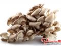 平菇出菇期和后潮菇的管理以及采收方法