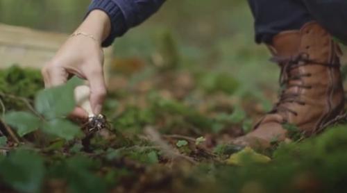 瑞士:蘇黎世食用菌進入采摘季