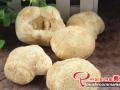 猴头菇常用的栽培原料及投入品安全要求