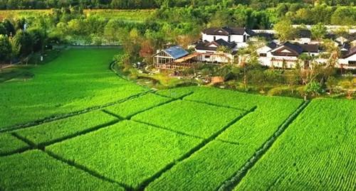 如何大力發展田園綜合體?農業農村部的答復來了!