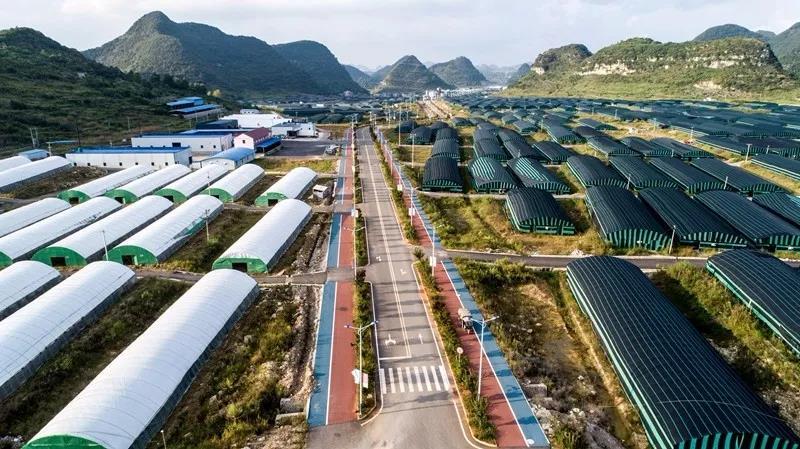 """贵州安龙县牢牢把握""""八要素""""纵深推进食用菌产业革命"""