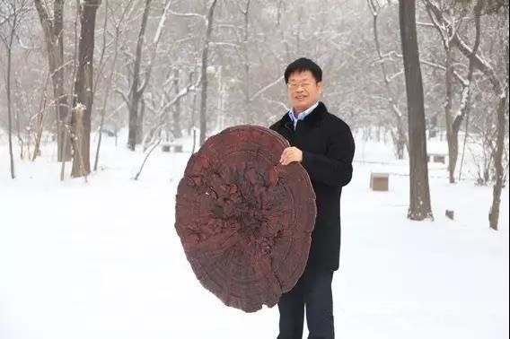 把论文写在田野里 ——记山西农业大学教授、省食用菌协会会长常明昌