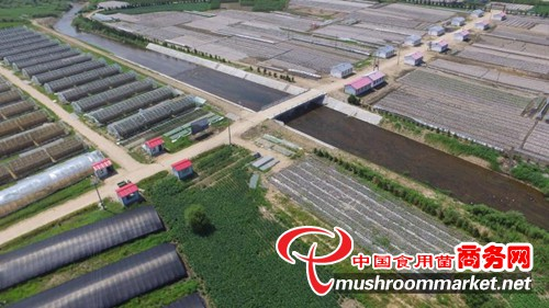 发挥龙头企业引领作用 努力打造中国食用菌第一乡 ——黑龙江珍珠山绿色食品有限公司发
