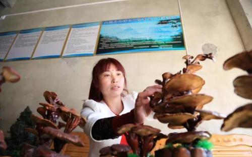 李曉燕:種植靈芝撬動百萬產業