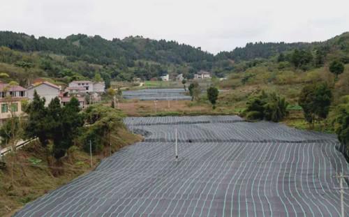 四川:強化食用菌產業融合發展 助力鄉村經濟振興