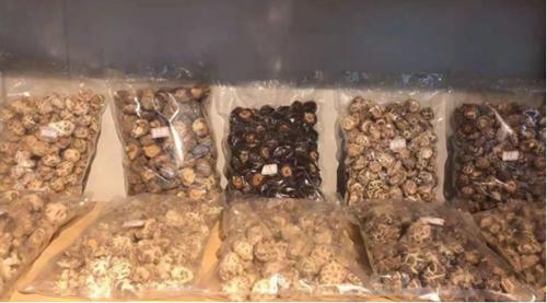 青海門源:香菇產業發展 助力農牧業經濟轉型