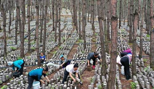新修订的《中华人民共和国森林法》公布:可以合理利用公益林林地资源和森林景观资源,