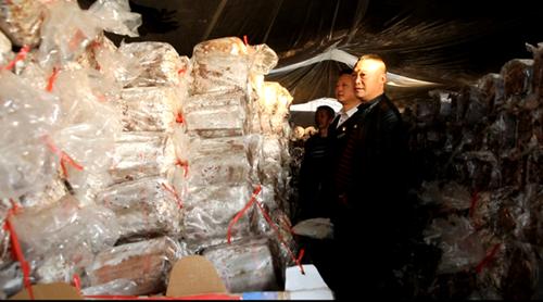 貴州黎平:黃漢勇種植靈芝帶動143戶貧困戶脫貧
