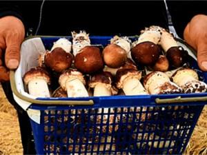 2019年重庆市巴南区种植大球盖菇为农户实现增收近125万元