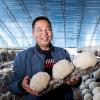 河南鲁山:食用菌产业富农家