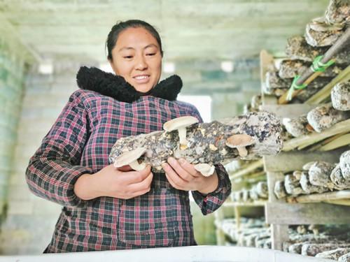 贵州:德江县闲置房巧变生产房发展食用菌产业 助农增收