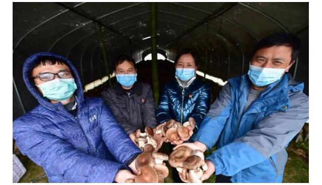 贵州丹寨:爱心香菇助力抗击疫情