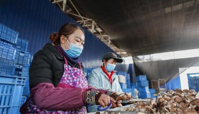 """重慶城口:花菇基地按下復工復產""""啟動鍵"""""""