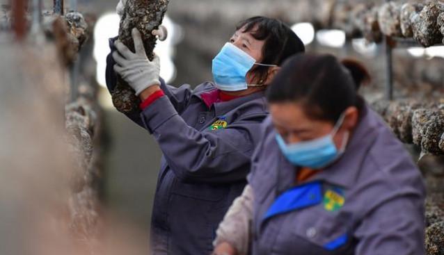 甘肅徽縣:菇農搶抓農時 食用菌生產忙