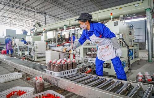 重庆:食用菌菌袋生产实现自动化