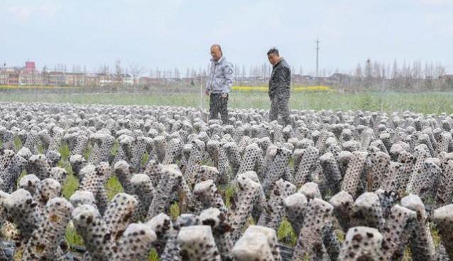 浙江:水稻黑木耳轮作项目助力农民增收