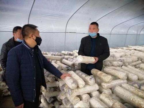 高树强:做大香菇产业 引领群众增收致富
